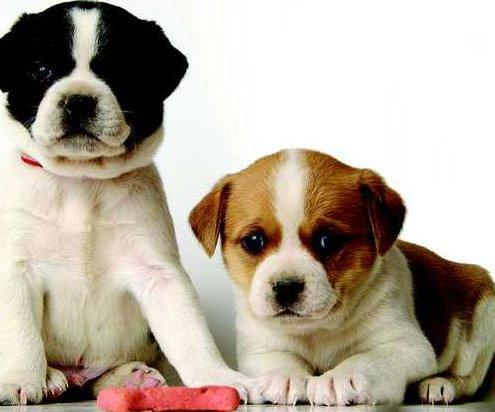 didis dogs