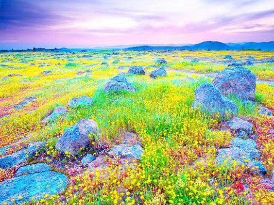 Among-the-Wildflowers1-LT