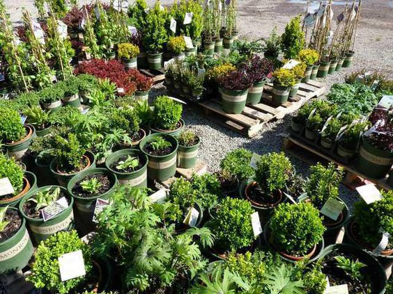 Westurf Nursery A Staple In Modesto