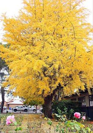 209FallTrees2012-5-left1