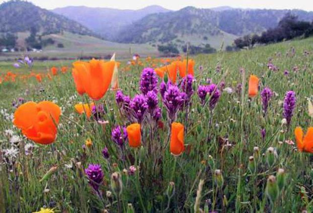 better-wildflower