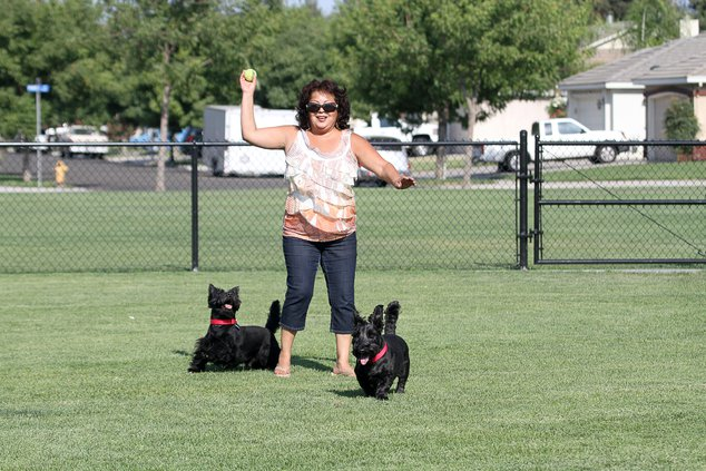 Swanson Centennial dog park