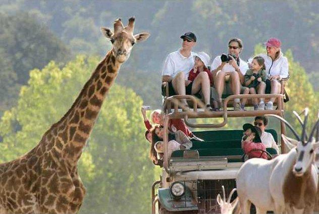 ride-safari-700x469
