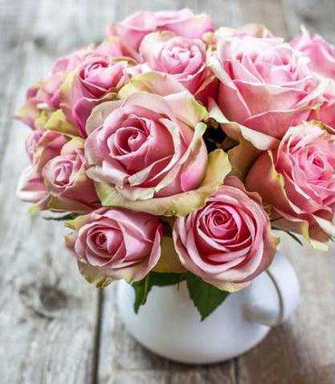 June roses pix
