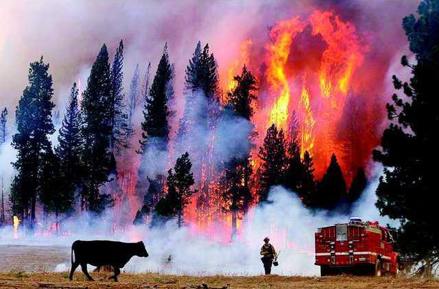 0828 Saddle Club Rim Fire