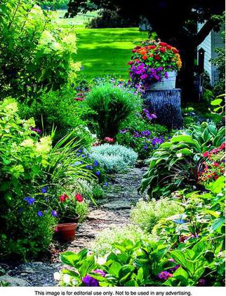 OER Plant pix