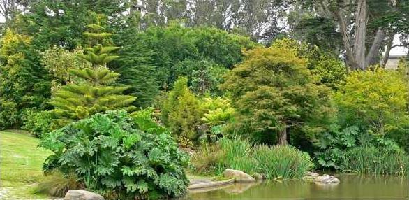San Francisco Botanical Garden pond 2-586x286