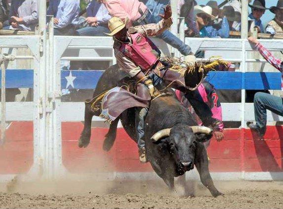 4-17 OAK Rodeo bull3