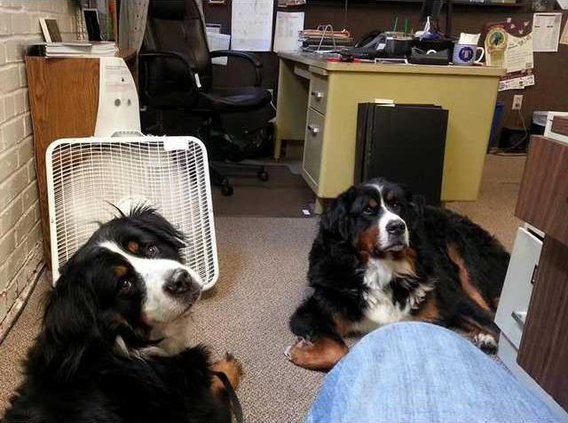 Work Buds