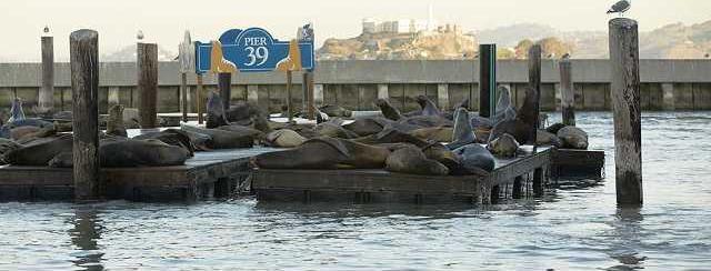Sea Lions 4 1170x550