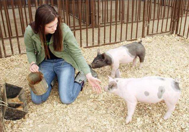ag farm pic1