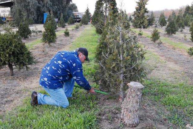 cuttingtree