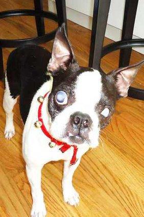 blind dog pic