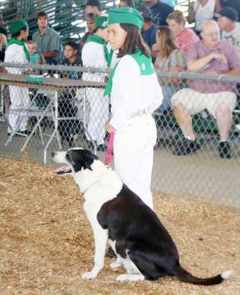 4-H dogs pic1