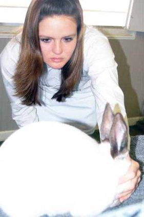 rabbits pic2