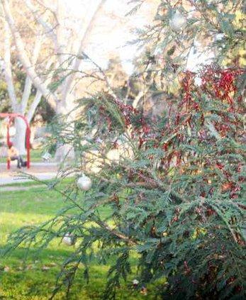 tree memorial pic