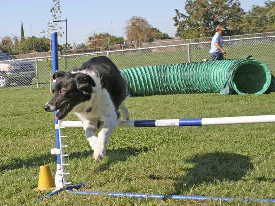 Dog park pic3