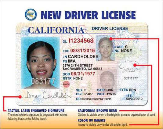 drivers license pic