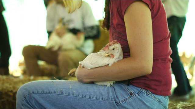 hens settlement pic