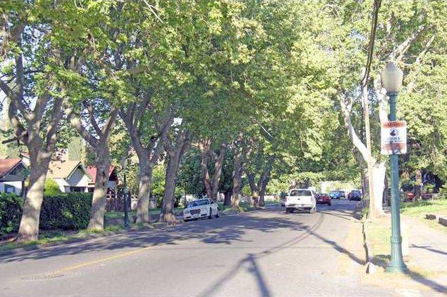 street tree pic