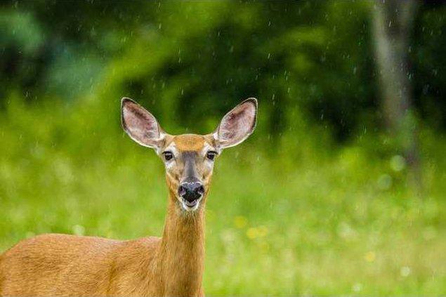 Wildlife week pix
