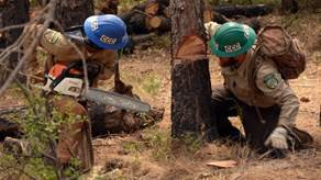 rim fire recovery pic3
