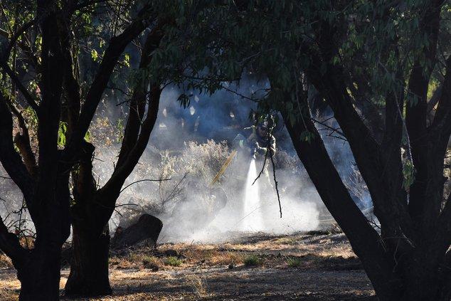 Almond orchard fire DSC_0347.jpg