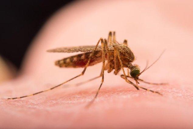 mosquito-NationalGeographic_2197799.adapt.885.1.jpg