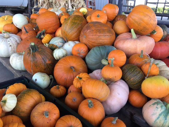 TUSD farm harvest festival preview