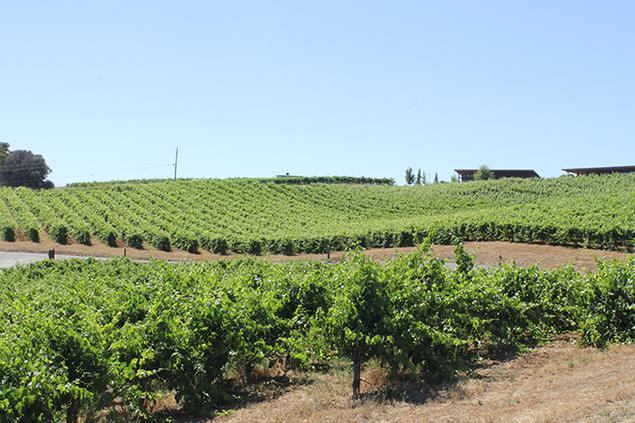 5326-amador_wine.png