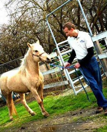 HorseRescueDSC 0515
