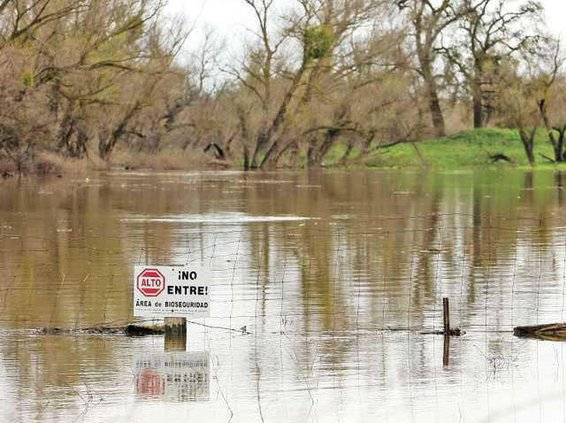 flood-LT