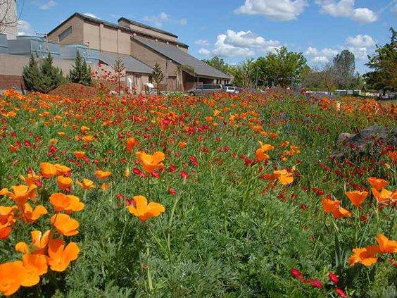 Meadow-Garden-Flowers 2 1200