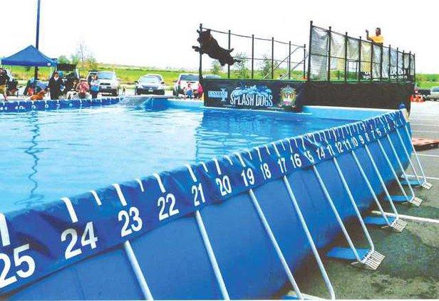 Splash Dog 02