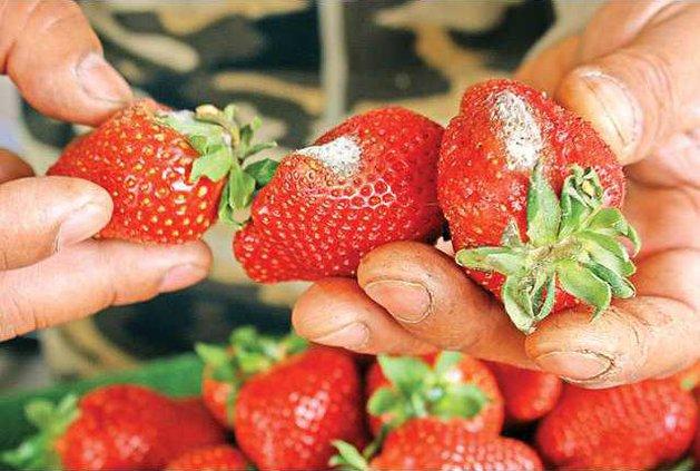 StrawberryCloseup