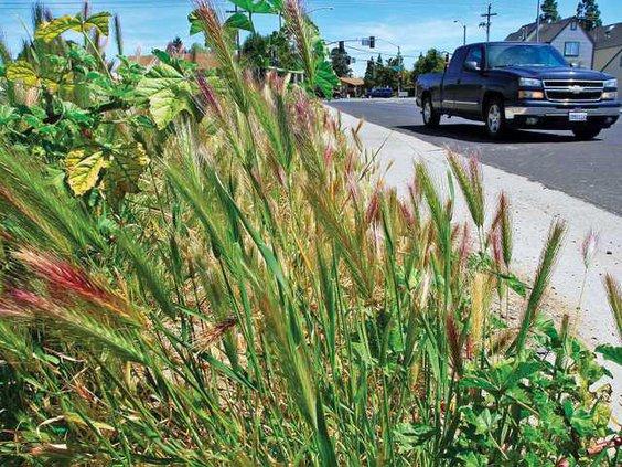 WEEDS2-4-16-11