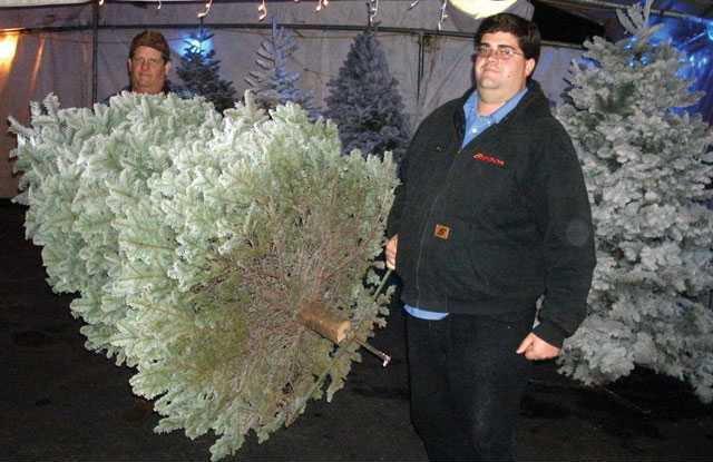 pic xmas-trees1