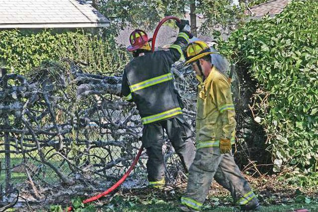 Fire-IvyFence-1