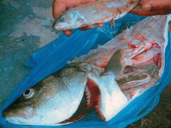 fishception lt