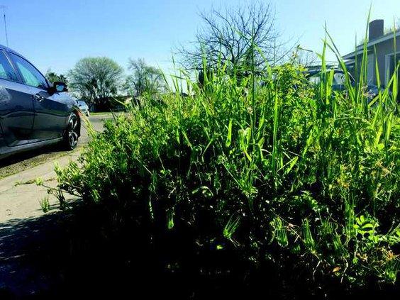 weeds copy