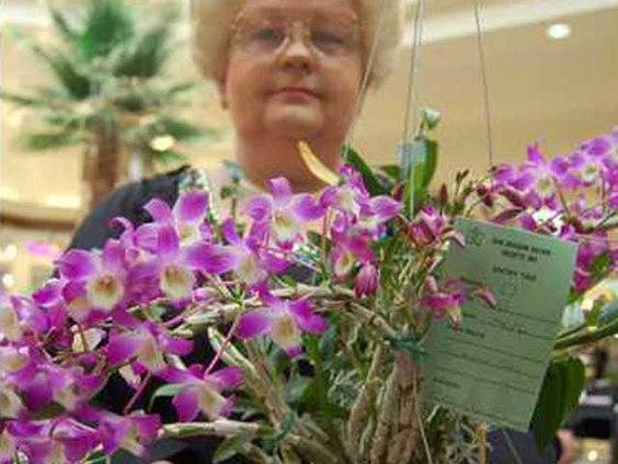 ORCHID--Pic