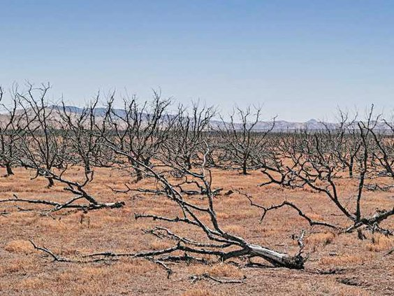 drought-use-LT