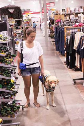 Guide dogs  pic