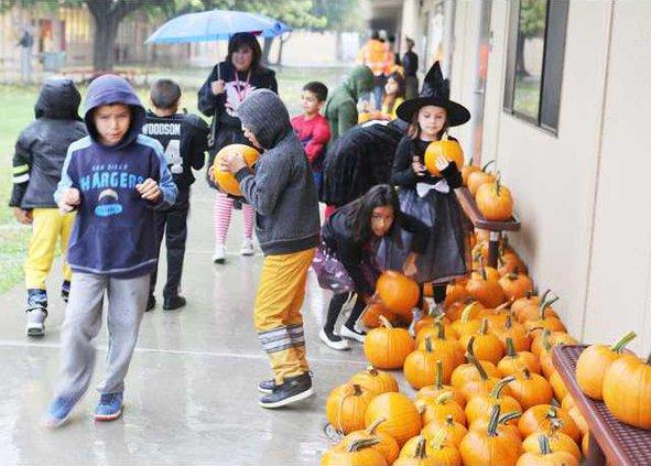 Halloween Cunningham pumpkins