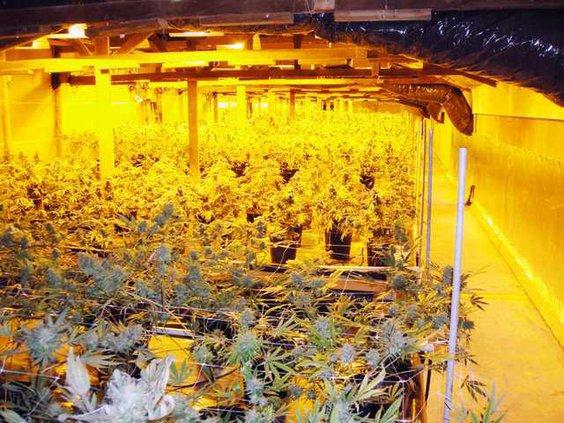 drug raid pic