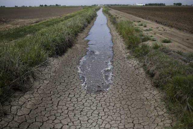 fields drought
