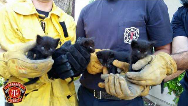 fire fighters kittens