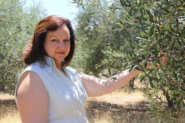 oliveoil 4