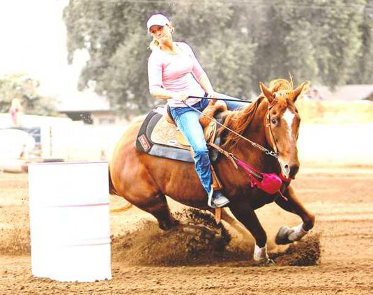 Bailey Horse Pict