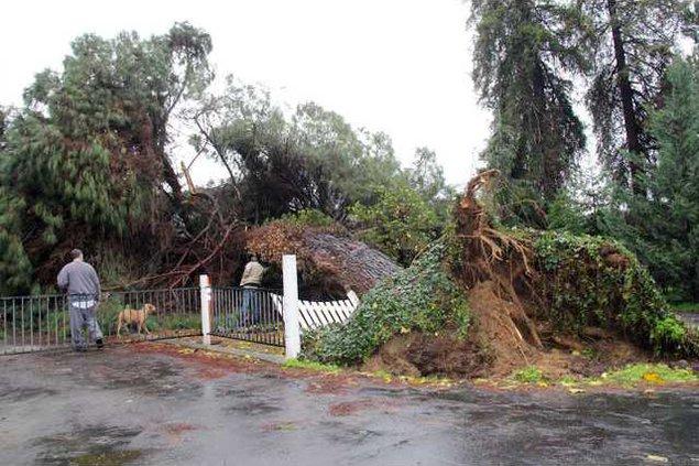 fallen tree pic1